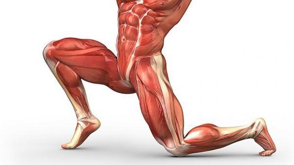 strengthen hip flexors exercises